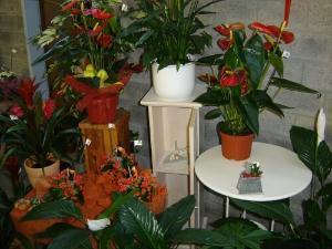 Diverse piante decorate