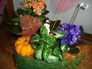 Composizione di piante nel cesto